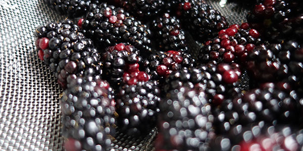 berries - volunteer to grow food